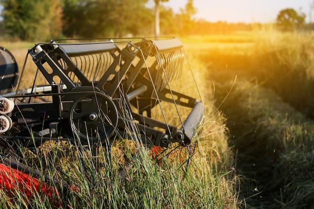 Machine d'agriculture de moissonneuse et récolte dans le travail du champ de riz