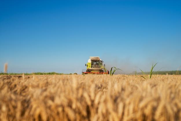 Machine de récolte travaillant au champ en matinée ensoleillée. concept d'agriculture.