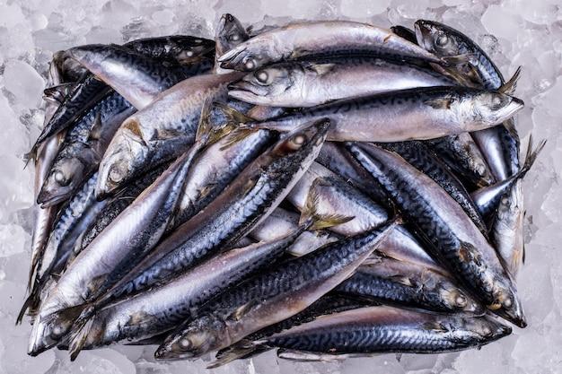 Mackerel l'industrie de la vente en gros du poisson distribuera au détail des fruits de mer à l'importation et à l'exportation des poissons commerciaux surgelés