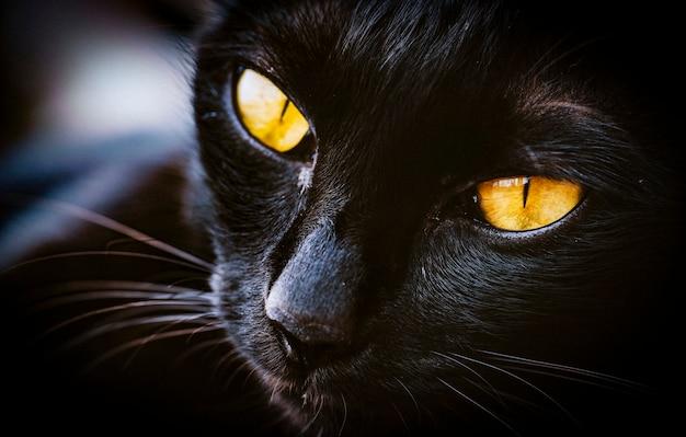 Macro d'animal mammal de chat