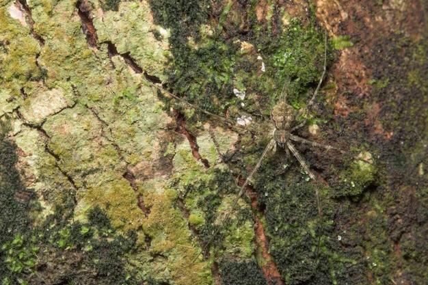 Macro araignée dans la nature