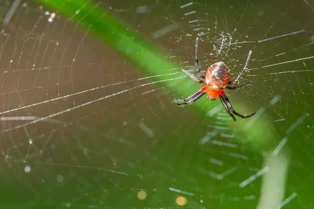 Macro araignée sur la plante