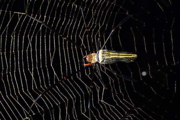 Macro araignée sur toile d'araignée