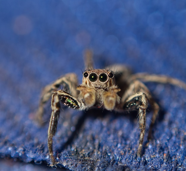 Macro d'araignée