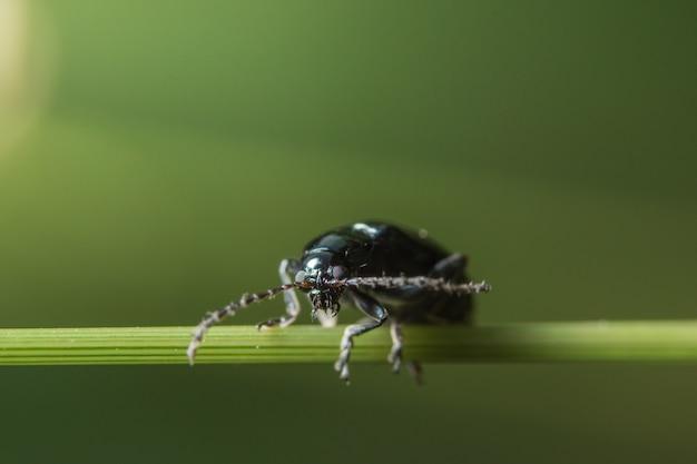 Macro beetle sur plante