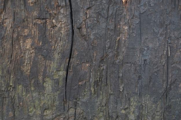 Macro bois tree texture brute