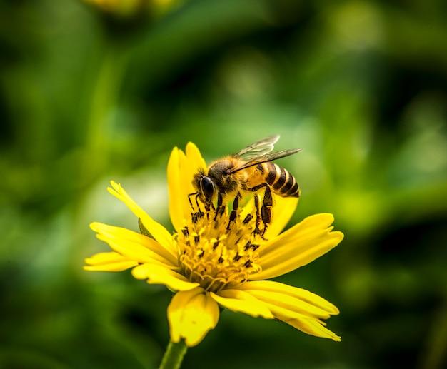 Macro de botanique de fleur de vraie nature