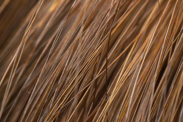 Macro de cheveux humains met en évidence l'utilisation de la surface de la texture brun-cheveux pour le fond
