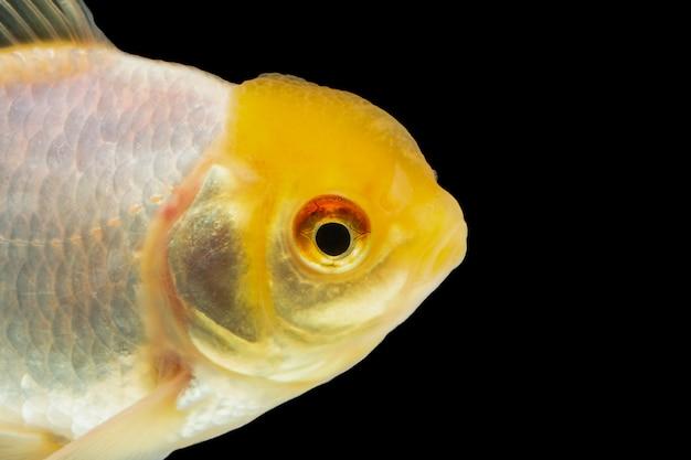 Macro coloré poisson rouge