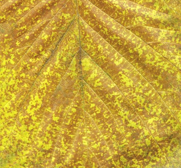 Macro feuille d'automne orange