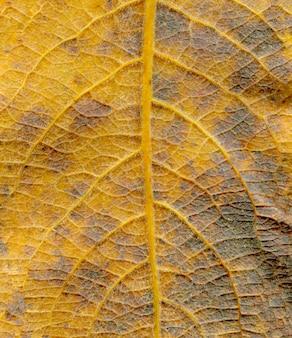 Macro de feuille d'automne orange.