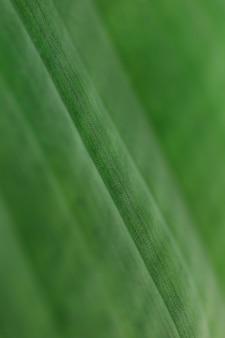 Macro d'une feuille tropicale verte