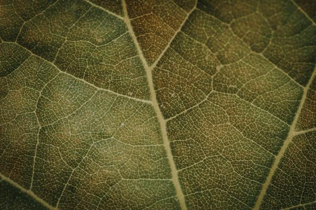 Macro d'une feuille vert foncé