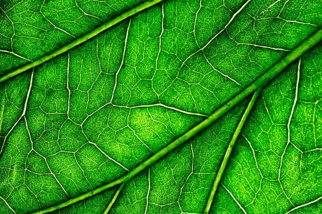 Macro d'une feuille verte