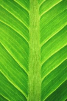 Macro feuilles texture de fond