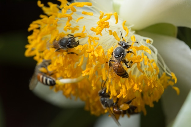 Macro fleur essaim d'abeilles