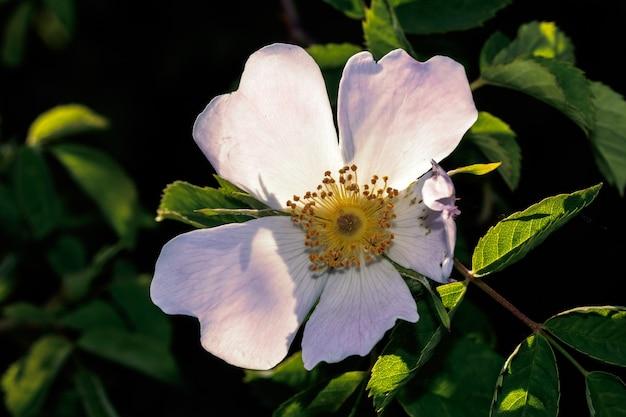 Macro de fleurs blanches sur un chemin de campagne