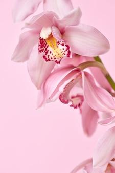 Macro de fleurs d'orchidées roses avec un motif présenté