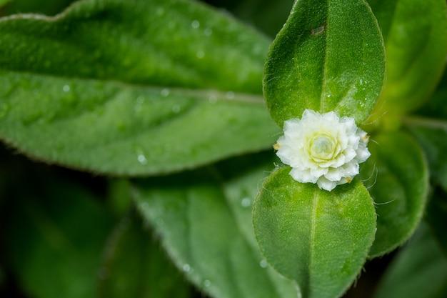 Macro fond fleur sauvage
