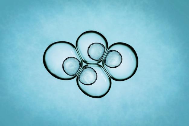 Macro gros plan de bulles de savon ressemble à l'image scientifique du processus de division cellulaire.