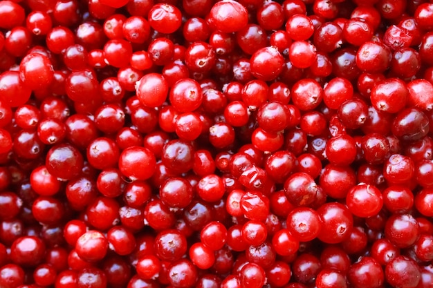 Macro de gros plan de fruits rouges dans un gros tas. vue de dessus