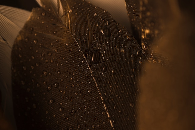 Macro gros plan d'une plume brune avec des gouttelettes
