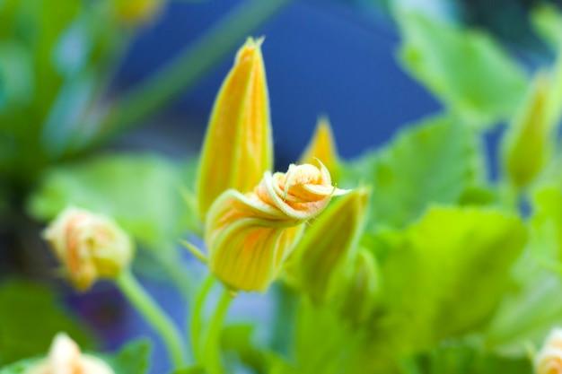 Macro et gros plan pour plante et fleur, bokeh et fond de nature, photo colorée