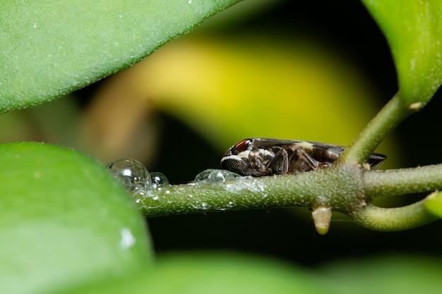 Macro insecte sur feuille