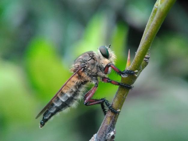 Macro d'insectes de la famille des mouches