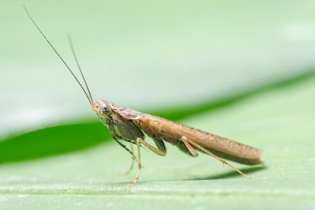 Macro mantis sur feuilles brunes