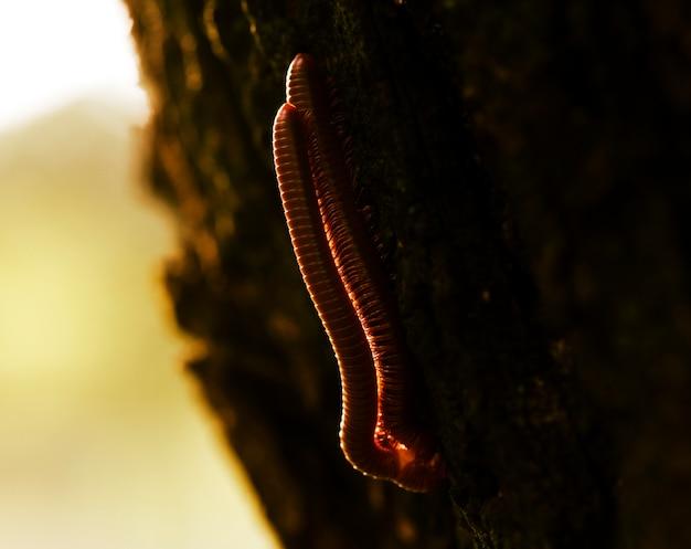Macro de milipède phylum arthropoda animal