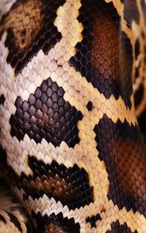 Macro de motif peau et écailles de serpent python
