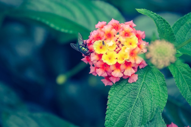 Macro parc vert flore nectar