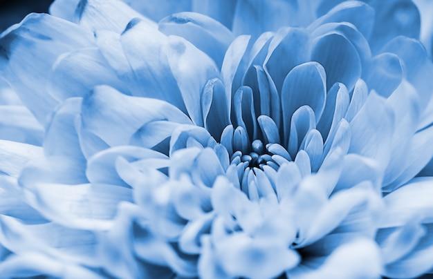Macro de pétales de dahlia bleu défocalisé, abstrait floral. close up of flower dahlia pour l'arrière-plan, soft focus,
