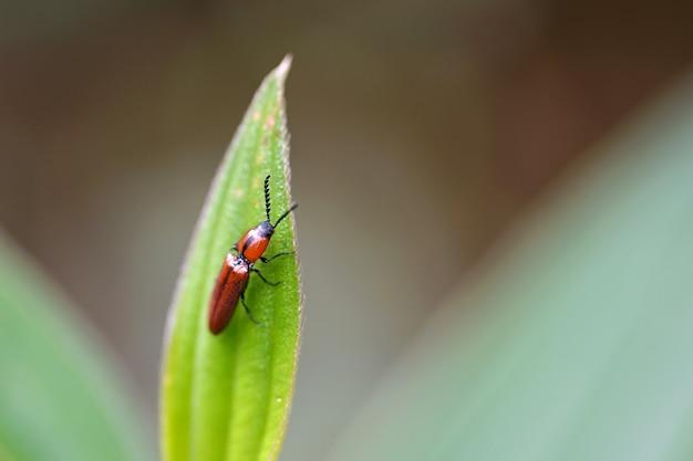 Macro petit bug