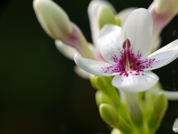 Macro photo de fleur, feuille et nature