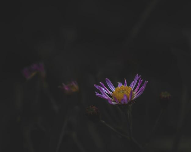 Macro photo d'une fleur lilas sur fond sombre