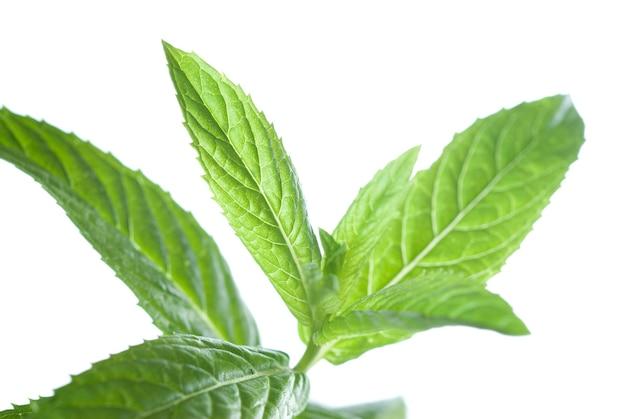 Macro photo de menthe verte isolée sur blanc