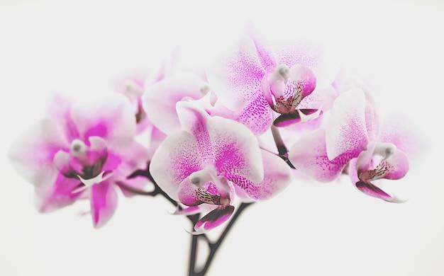 Macro photographie fleur d'orchidée violette