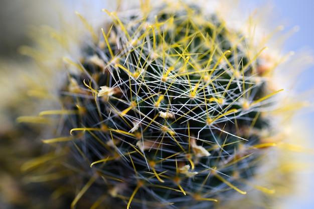 Macro plante fleur cactus gros plan