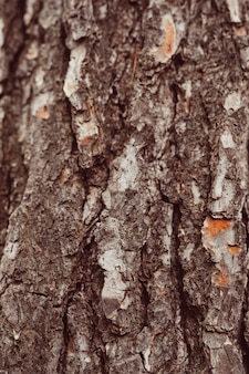 Macro shot de bois