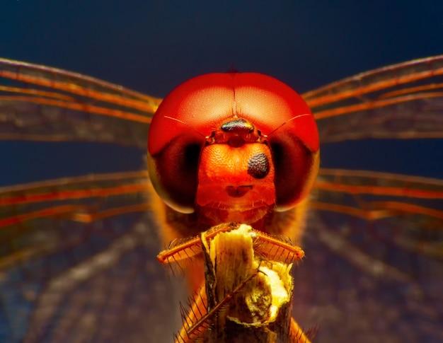 Macro shot extrême oeil de libellule à l'état sauvage gros plan sur les yeux de libellule est très smail