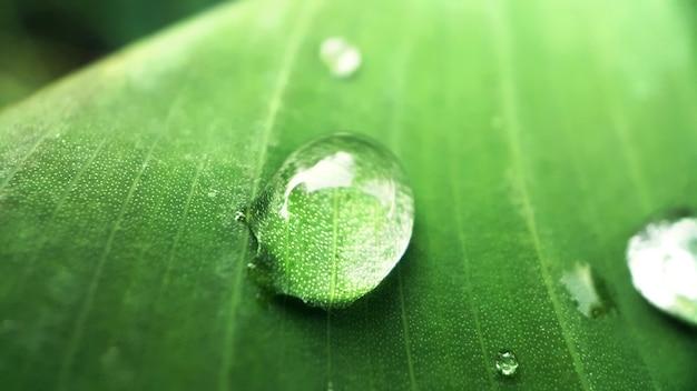 Macro shot de gouttes d'eau sur la feuille verte