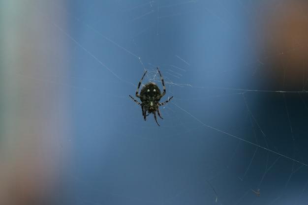 Macro spider sur le web