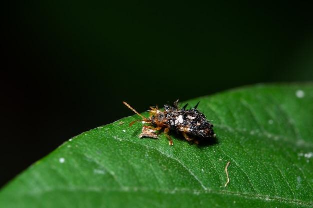 Macro stink bug sur une feuille