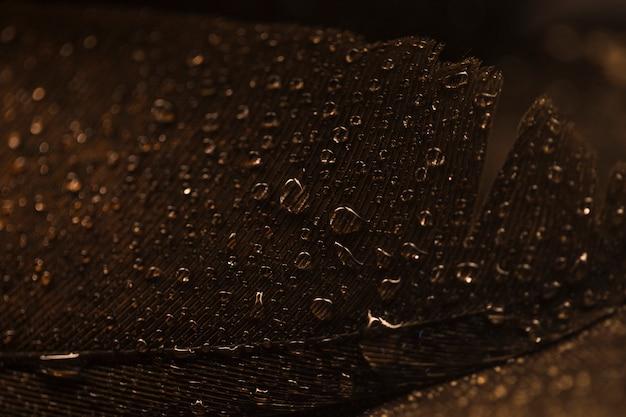 Macro de surface de plume brune avec des gouttes d'eau transparentes