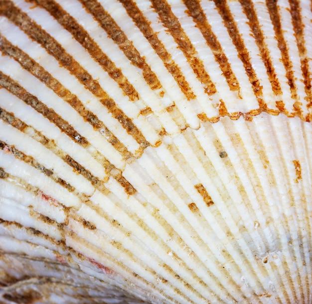 Macro texture coquillage, vue de dessus, gros plan