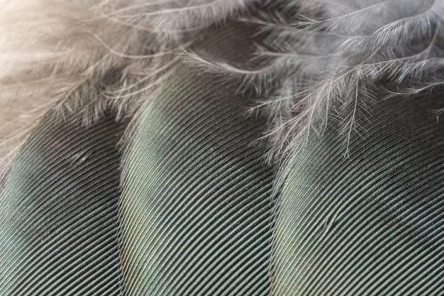 Macro up texture plume abstrait nature