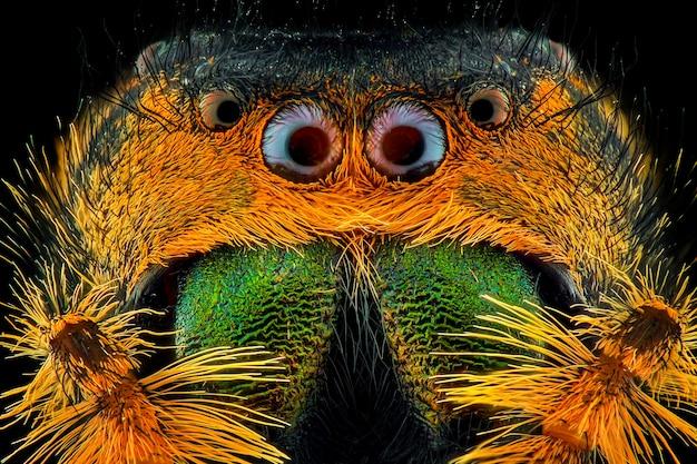 Macro de visage d'araignée
