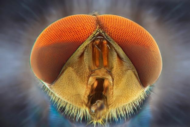 Macro de visage de mouche domestique